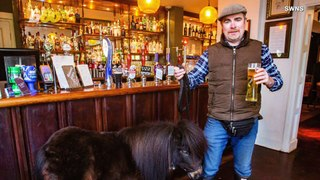 Horse Walks Into a Bar… Miniature Pony Makes Daily Visits to Local Pub; Delighting Patrons!
