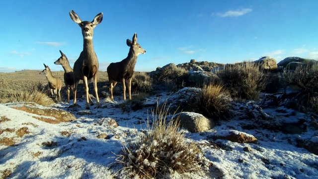 A Deer Migration You Have to See to Believe - National Geographic