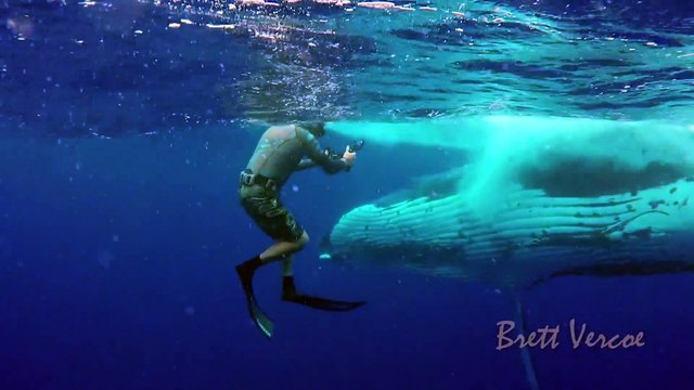 Closest whale encounters