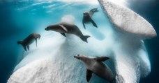 Les 15 plus belles photos sous-marines de l'année récompensées au concours Underwater Photographer of the Year