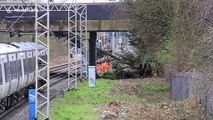 London trains brought to standstill by tree that had fallen onto overhead wires