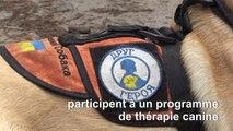 Ukraine: des chiens pour soigner le stress post-traumatique des soldats