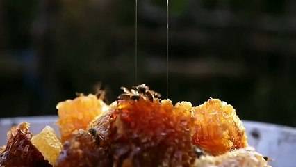 Bal Ülkesi (Honeyland) Türkçe Altyazılı Fragman