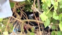Yunanistan'a geçmek isteyen sığınmacıların bekleyişi sürüyor