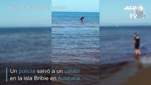 Rescate animal en Australia