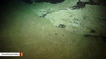 Underwater Robot Spots Bizarre Squidworm On Camera