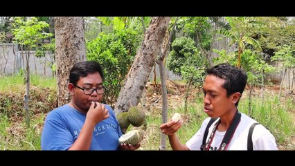 Durian Ngembal Pasuruan: Rasanya Bisa Dipengaruhi Buah di Sekitarnya