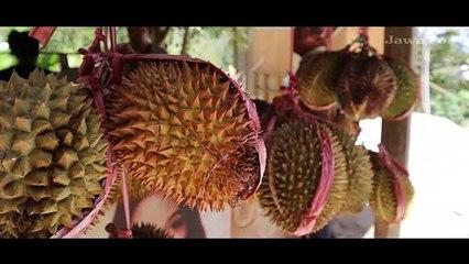 Belanja Durian di Pasar Pagotan Madiun, Borongan Lebih Miring