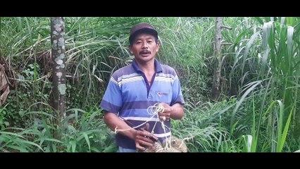 Durian Bromo