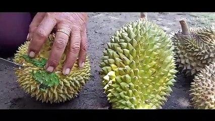 Durian Lokal Gadungan Kediri Sempat Menghilang Pascaerupsi Kelud