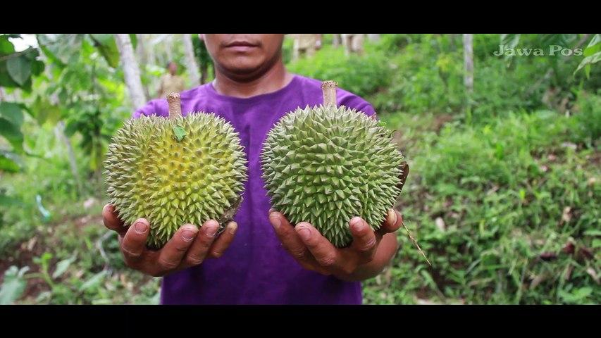 Durian Kembang Lumajang