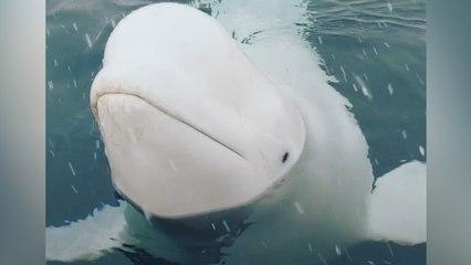 Verbazingwekkende ontmoeting met witte dolfijn in Noorwegen
