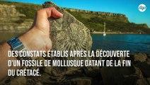 Cet ancien coquillage révèle que les jours duraient 30 minutes de moins il y a 70 millions d'années