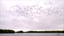 All these birds dive at the same time to fish
