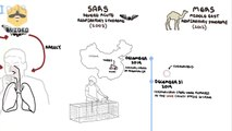 Coronavirus pandemic a visual summary of the new