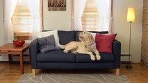 "Nylabone Dura Chew ""X"" Bone Beef Flavored Dog Chew Toy | PuppySimply"
