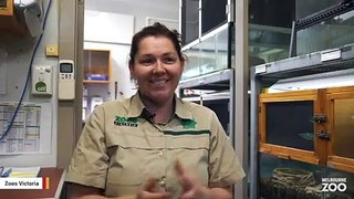 Zoo Staffer Got Frogs To Mate Using Thunderstorm Video On YouTube