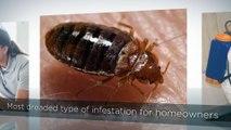A1 Bed Bug Exterminator St Louis
