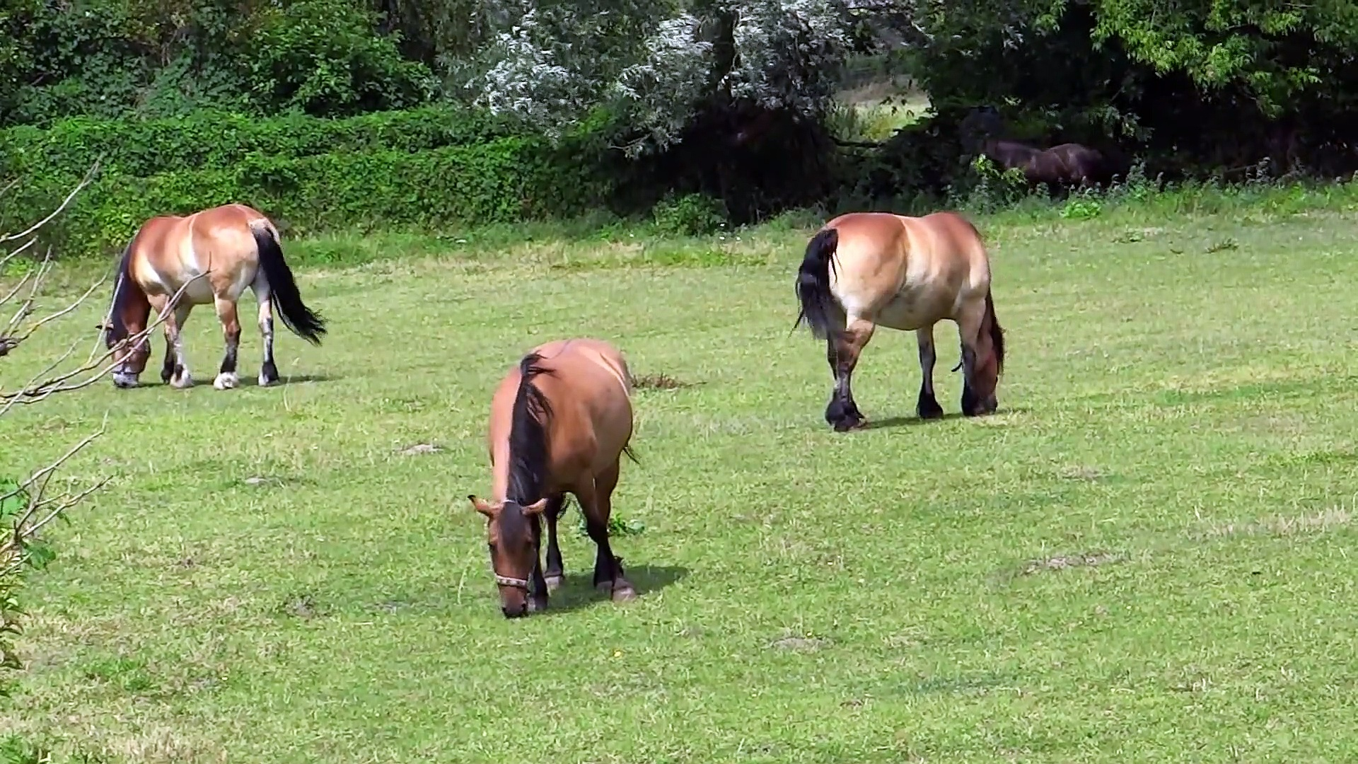 funny horses#the best kids of horses