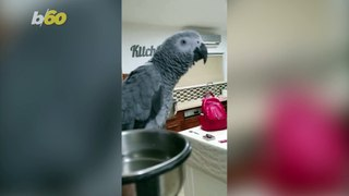 Talking Parrot Warns the World Not to Go out Because 'There Is Corona'