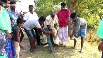 Villagers capture crocodile that entered this village in southern India
