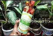 TERMURAH!!! +62 813-2666-1515 | Beli Souvenir Wisuda Anak Tk di Bandung