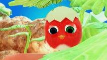 ✅ Pájaro Cucú #32   Dibujos Animados en Español   Compilación De Dibujos Animados Infantiles