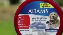 Adams Plus Flea and Tick Shampoo with Precor, 12 Ounce | PuppySimply
