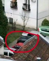 Confinement : Une femme sort son chien depuis son balcon en Serbie
