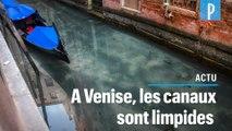 Confinement :  les eaux de Venise redeviennent transparentes