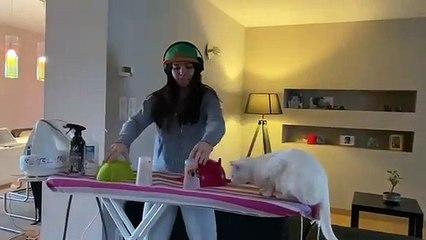 Confinement : Elle mixe à côté de son chat et ça dérape !