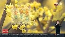[날씨] 전국 맑고 따뜻한 봄…대기 건조, 화재 유의