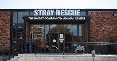Ces deux chiens ont été attachés puis abandonnés par leurs maîtres, avant que le refuge Stray Rescue ne les sauve
