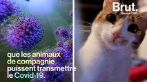 Covid-19 : les animaux de compagnie, indirectement touchés par la pandémie