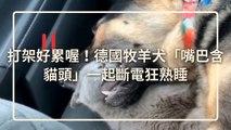 petsmao.nownews-copy2-20200325-12:14