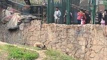 حديقة حيوانات بكين تفتح أبوبها أمام الزوار مجددا