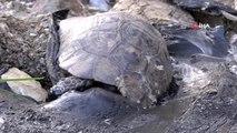 Zifte yapışan 1 köpek ve 5 kaplumbağa 2 gün kurtarılmayı bekledi