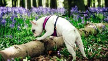 Go Ahead, Let Your Dog Sniff When You're Taking Walks