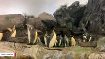 Penguins Have A Bubble Party