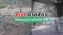 สวนสัตว์ออสเตรเลียจัดให้ ! Live ชีวิตสัตว์ให้คนดูช่วงโควิด 19 ระบาด