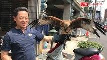 謝昌仁跟著老鷹放飛自我 遠離疫病