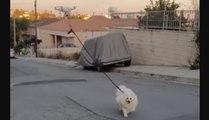 Confinement : Un drone promène son chien