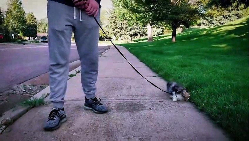 Oui, on a aussi le droit de promener son chaton
