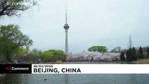 Les cerisiers en fleurs pour fêter un possible retour à la normale en Chine