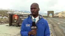 A NBC reporter's reaction to seeing a horde of bison approaching in Yellowstone