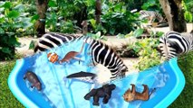 Learn Colors with Zoo Wild Animals on Water Slide Surprise Egg Toys for Kids Children