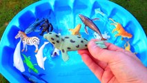 Learn Colors with Wild Animal Toys Sharks in Blue Water Tub Toys For Kids