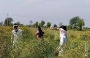 Rabi Harvesting
