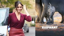 Duchess Of Sussex, Meghan Markle To Narrate Disneynature Documentary Elephant