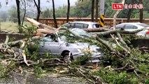 車頂被壓扁!埔里狂風暴雨吹斷路樹 中潭公路車毀人傷